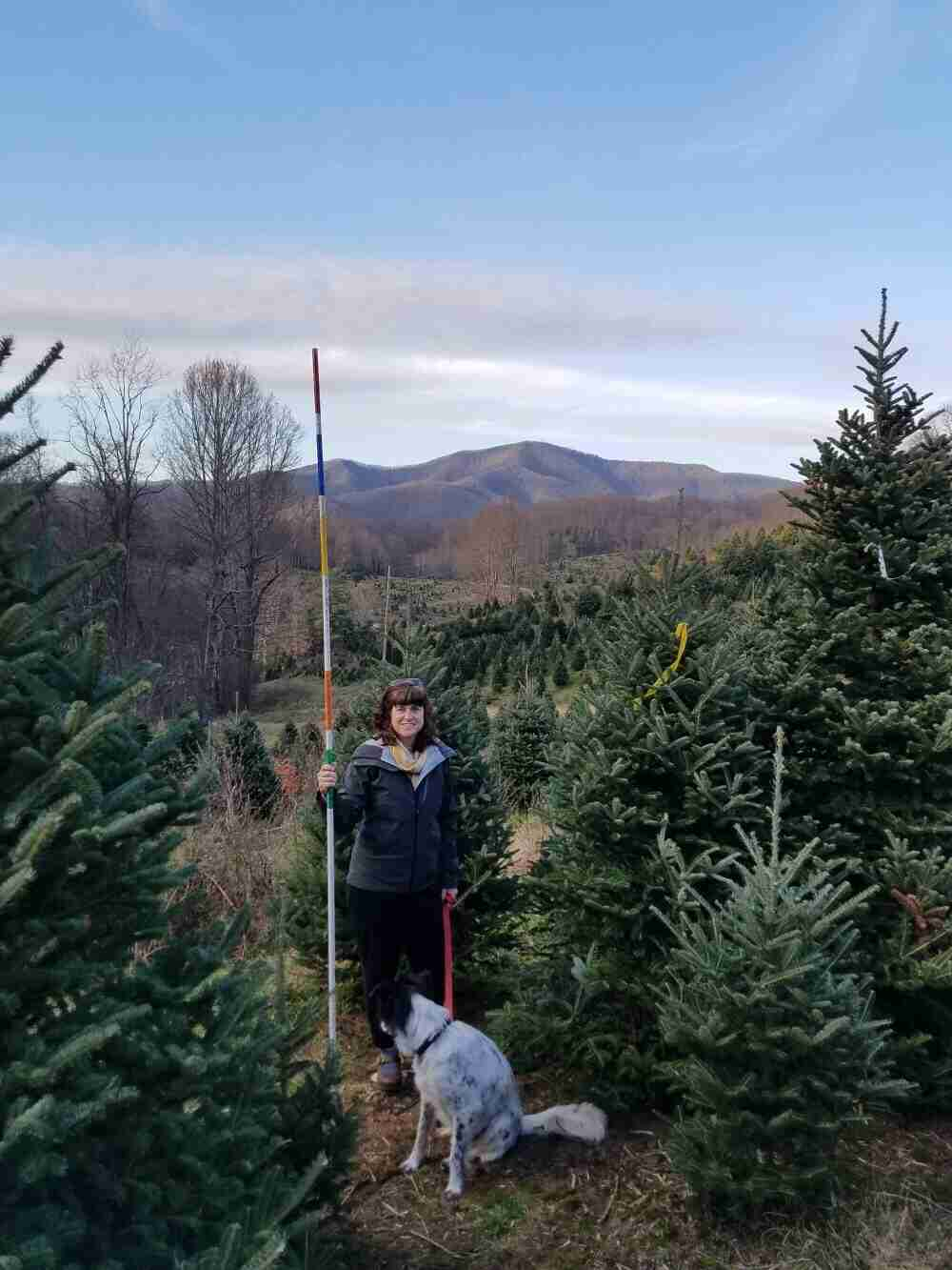 Pick your own fresh cut Christmas Tree and stay at the Marshall House